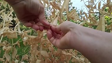 Pretty Hands Cracking Open Dried Peas, ASMR Muse, SFW